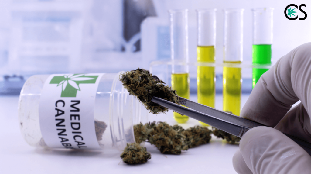 CBD & Drug Test