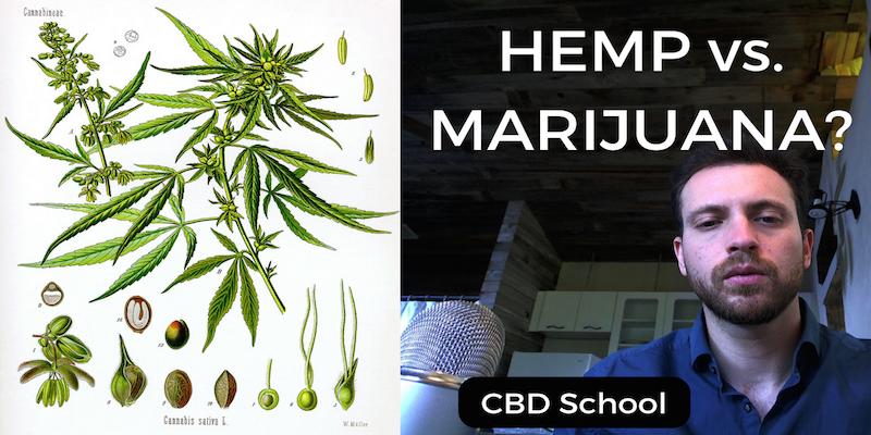 hemp-vs-marijuana-1-copy.png