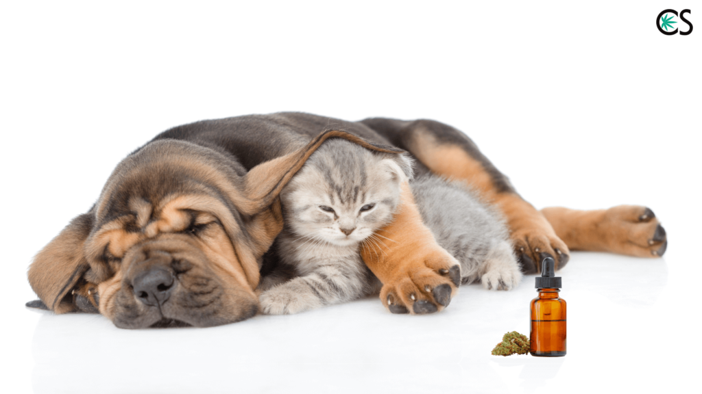 Introduction_to_Using_CBD_Hemp_Oil_for_Pets