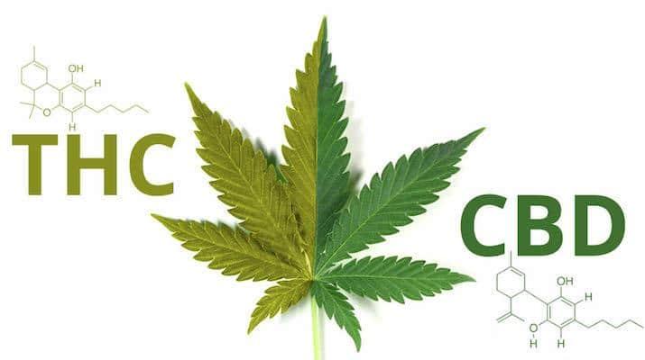 THC CBD Ratio