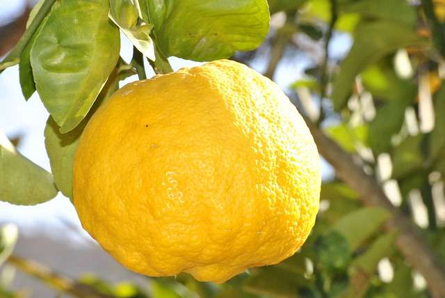 lemon-181650_640.jpg