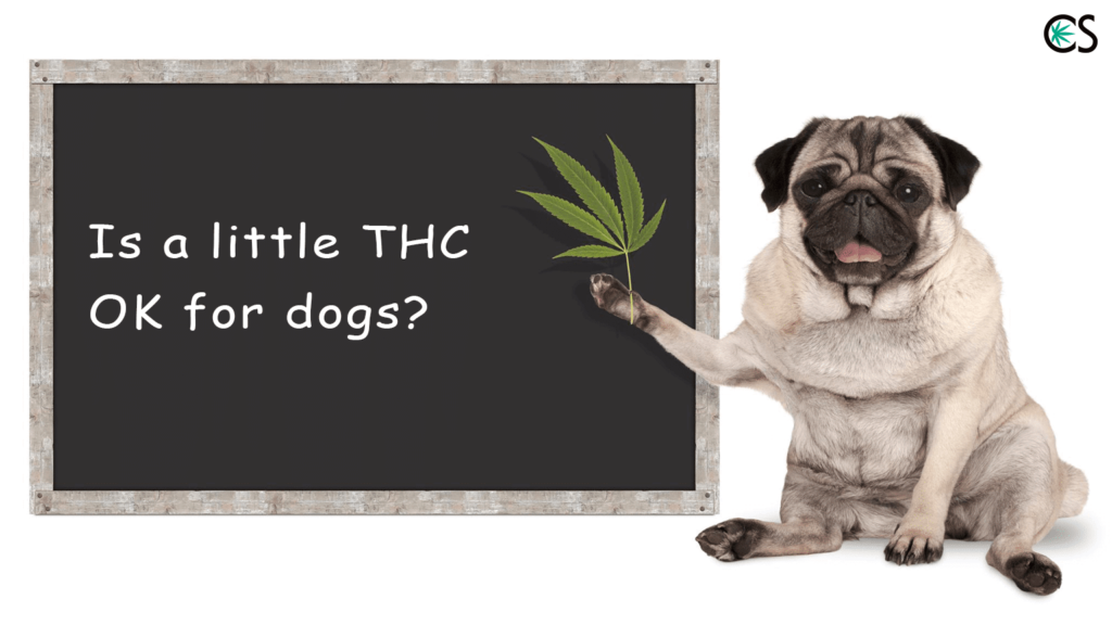 Is little THC okay for Dogs