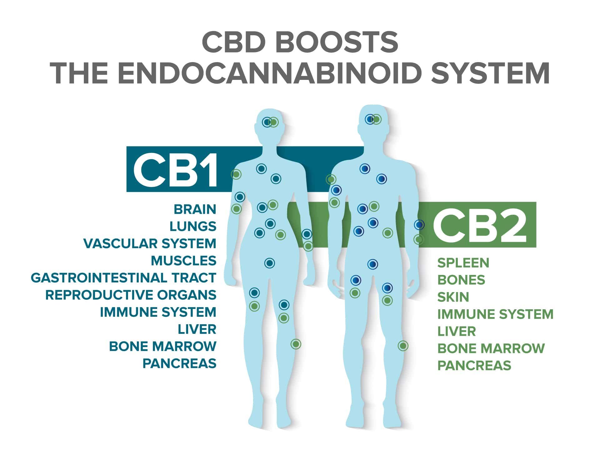 Symptoms of Depression_Endocannabinoid