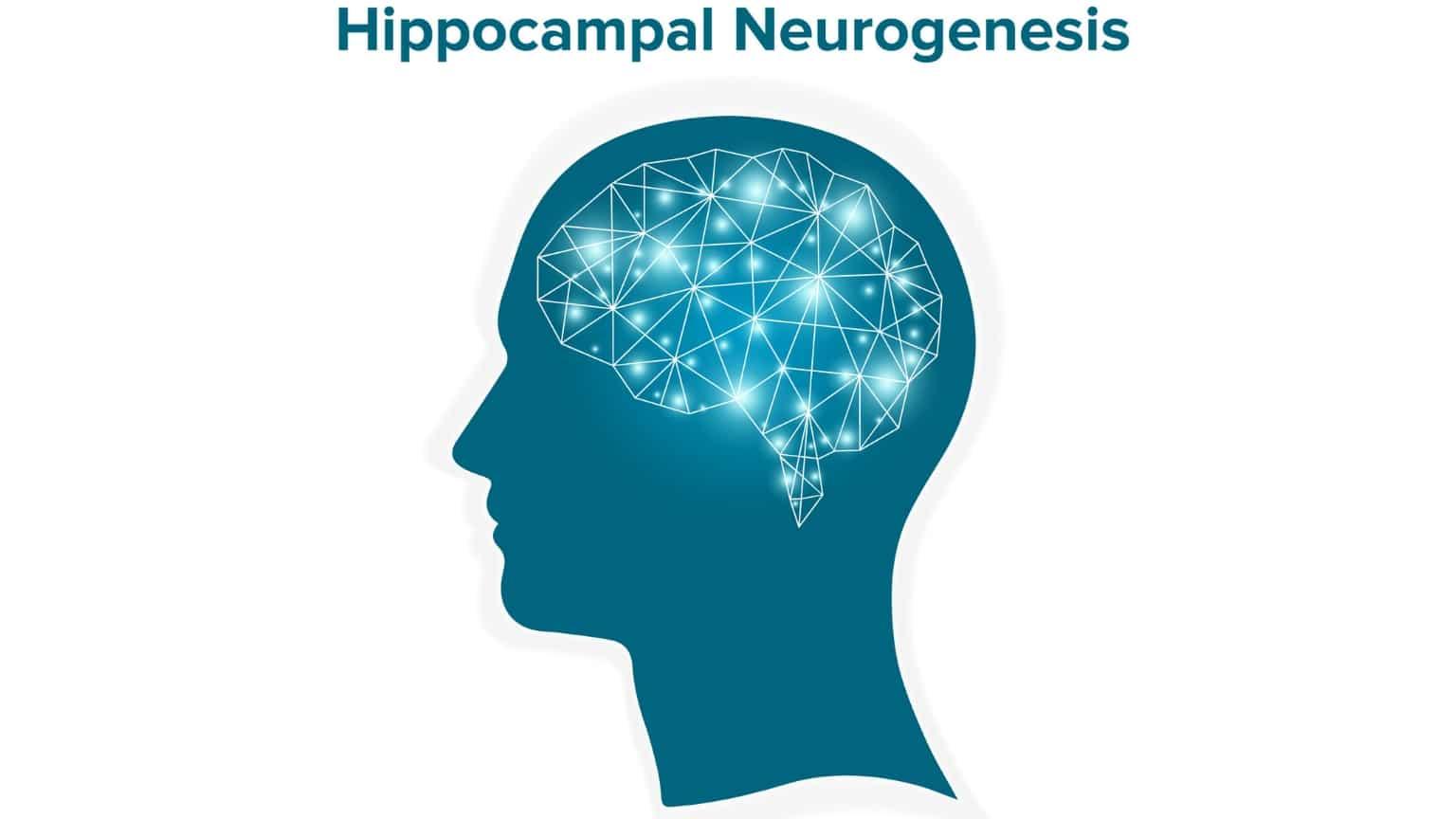 cbd-hippocampal-neurogenesis