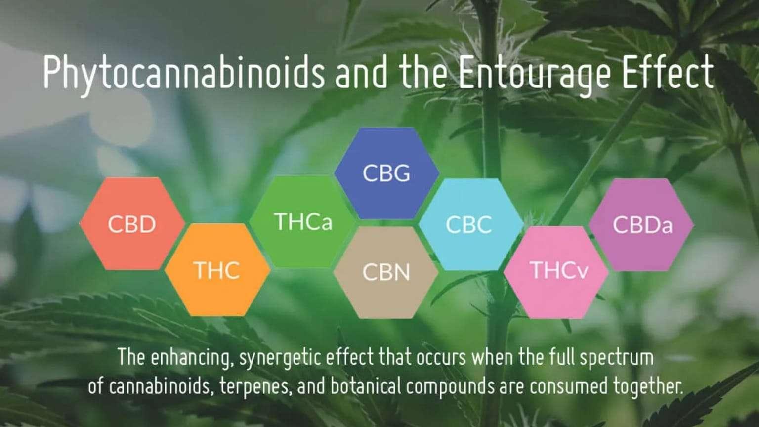 phytocannabinoids-entourage-effect