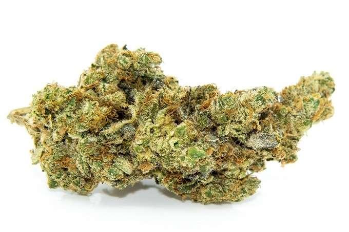 raw cannabis flower