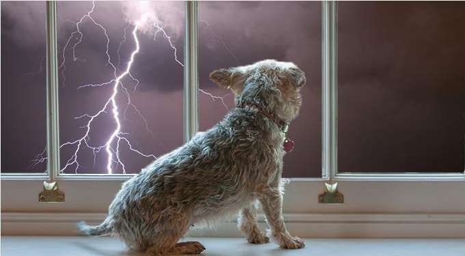 Dog And Thunderstorm
