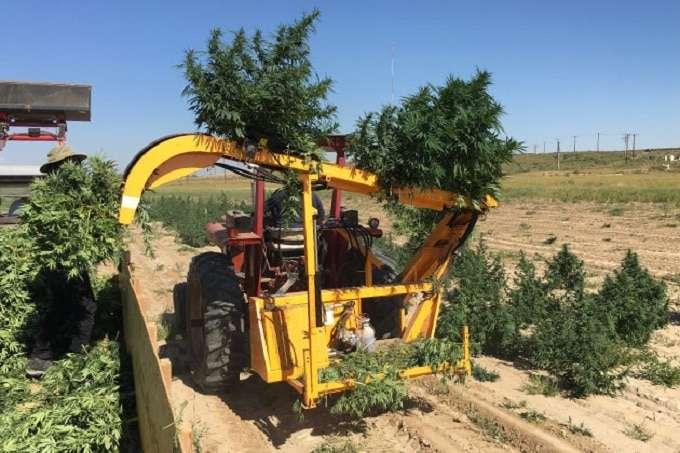 Industrial Hemp Harvester