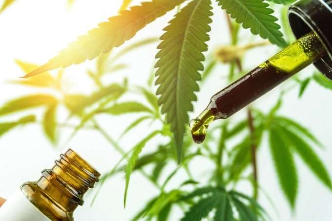 Prevent cbd from contacting direct sunlight