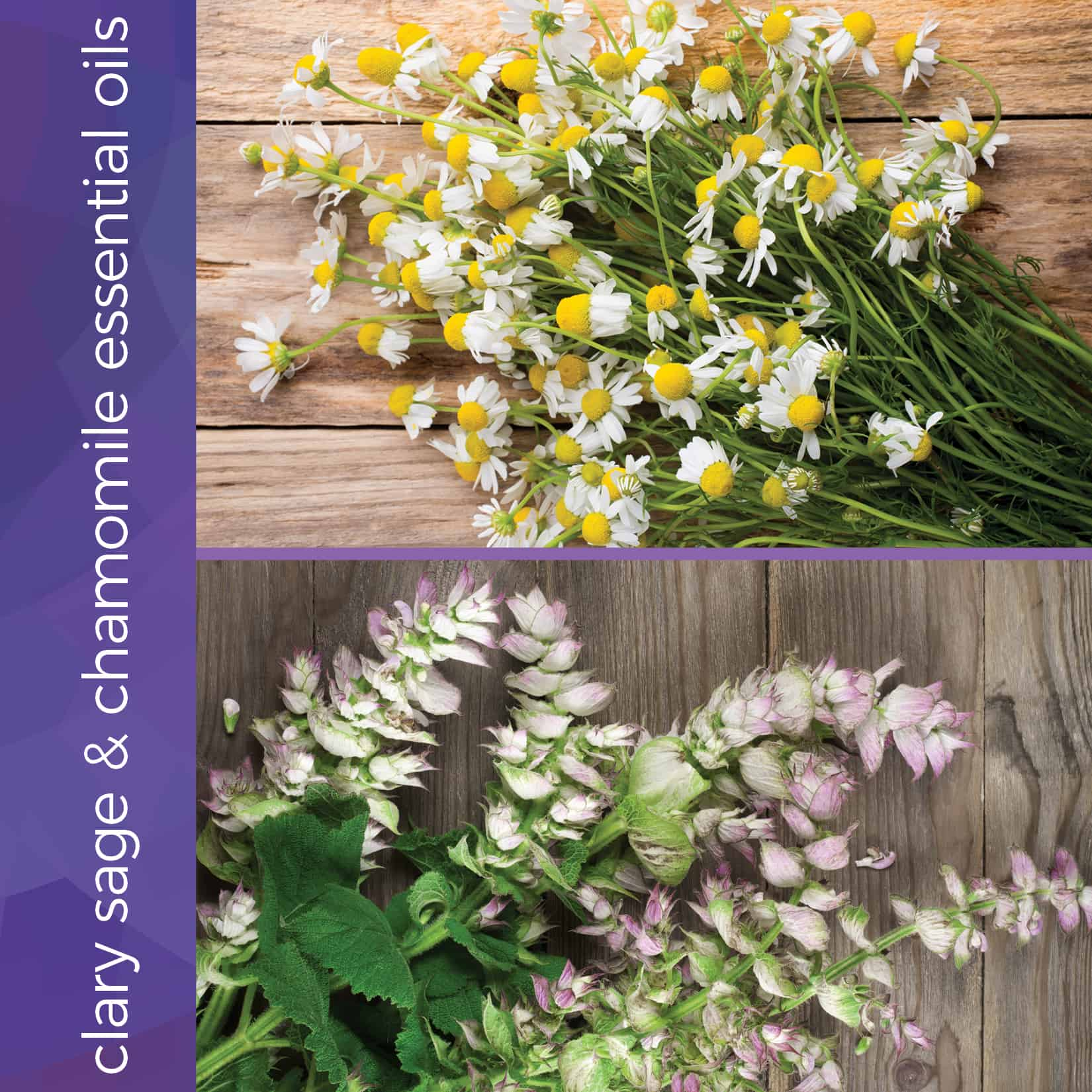 clary sage and chamomile