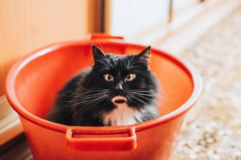 black cat in bucket