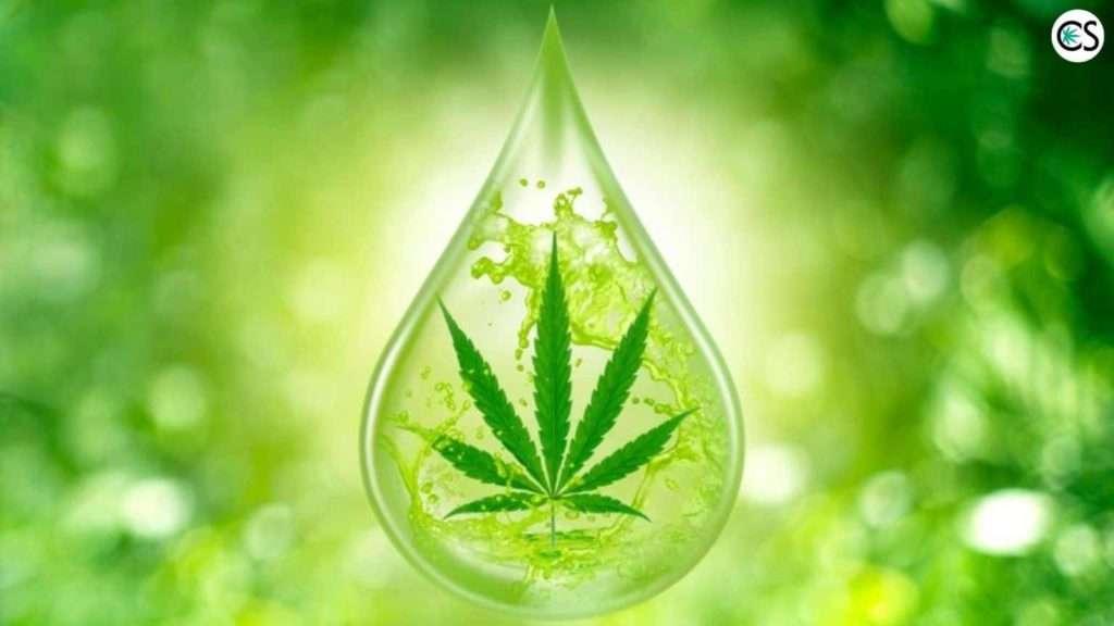 cannabis leaf inside water drop