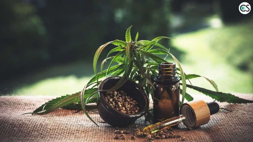 hemp plant with hemp seeds and tincture