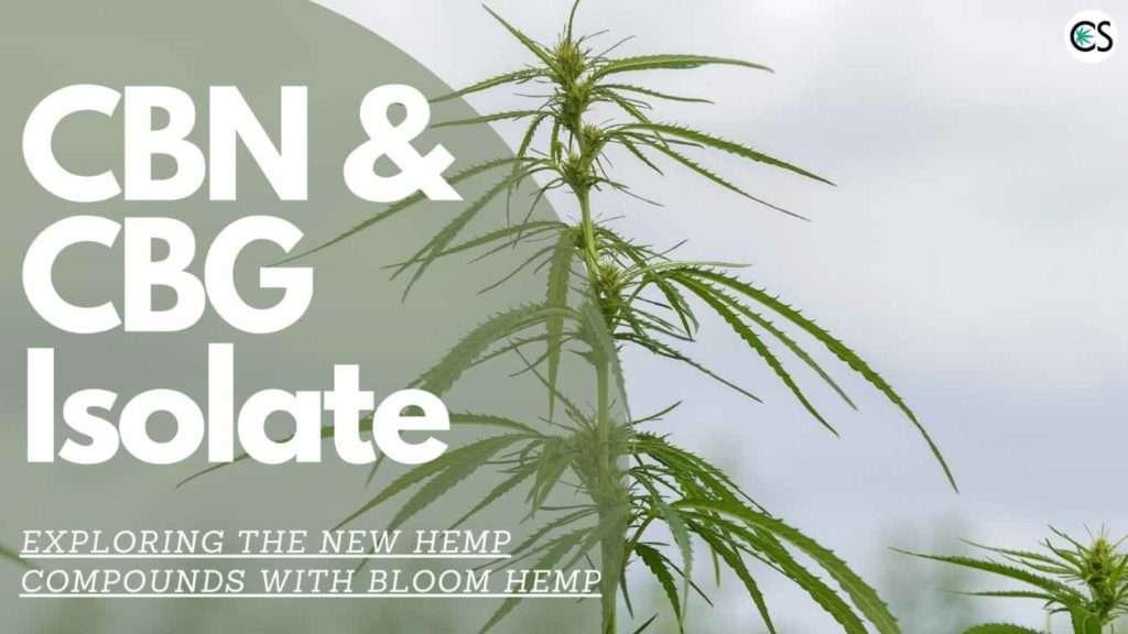 hemp plant in the wind